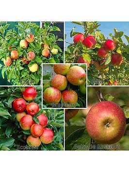 family-apple-tree-5-varieites-on-1-tree-5l-pot