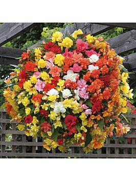begonia-supercascade-mix-20-grden-ready-plants