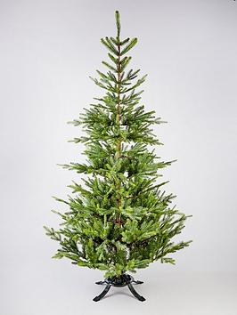 nordman-christmas-tree-with-fir-fragrance-6ft