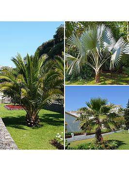 hardy-patio-palm-tree-collection