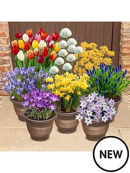 complete-300-bulb-garden-7-varieties-autumn-planting-for-spring-colour