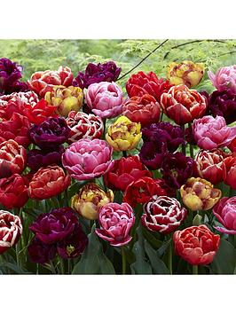 peony-flowered-tulip-mix-x-20-bulbs