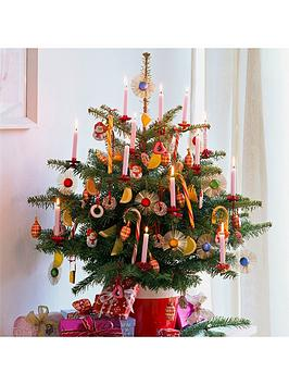 fresh-potted-nordmann-fir-christmas-tree-12-14m