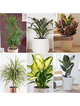 Very  Foliage Houseplant Mix 6 X 12Cm