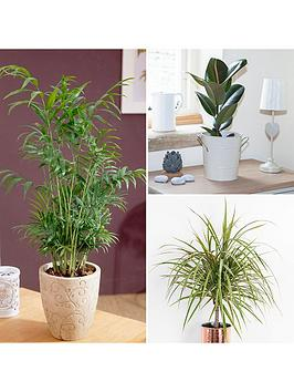 Very Foliage Houseplant Mix 3 X 12Cm Picture