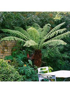 hardy-tree-fern-2ft-log
