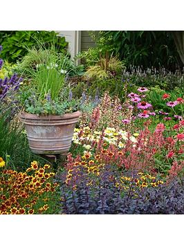 Very Lucky Dip Perennial 12 Plant Collection Picture