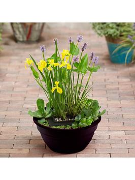 Very  Complete Patio Pond Kit - Plants, Gravel And Bowl