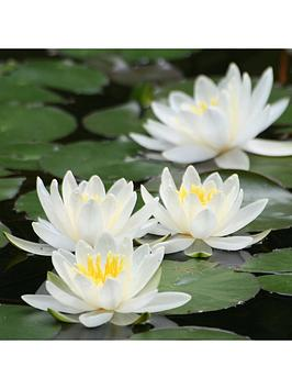 Very Water Lily Planting Kit ¿ White Picture