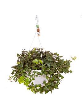 hedera-wonder-hanging-pot-white-70-100cm