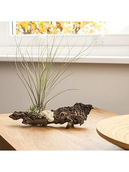 grand-mopani-wood-airplant-arrangement