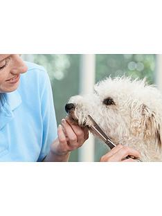 virgin-experience-days-introduction-to-dog-grooming-15-part-online-course
