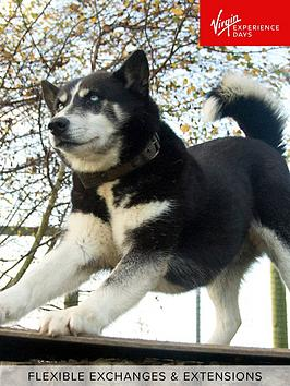 virgin-experience-days-hike-with-huskies-and-entry-to-eagle-heights-wildlife-foundation-in-kent-for-two