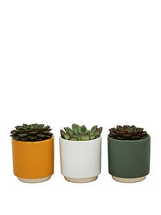 ivyline-set-of-3-potted-succulents