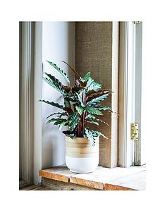 ivyline-bamboo-white-planter