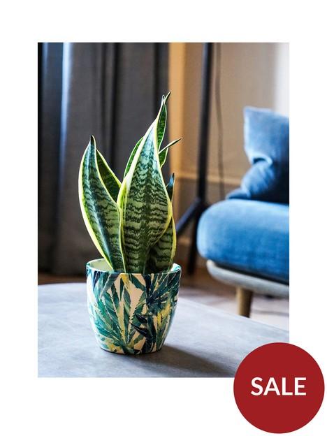 ivyline-real-snake-plant-in-leaf-pot