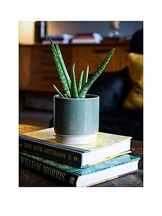 ivyline-real-aloe-vera-plant-in-green-pot