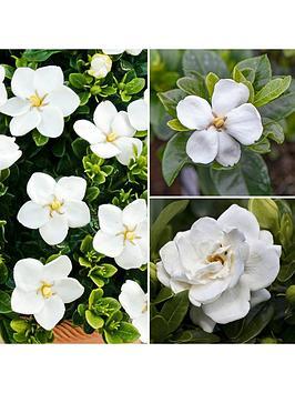 gardenia-collection