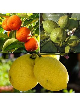 citrus-grove-collection-3-x-9cm-plants