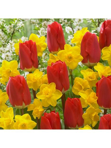early-red-tulip-narcissus-tete-a-tete-x100