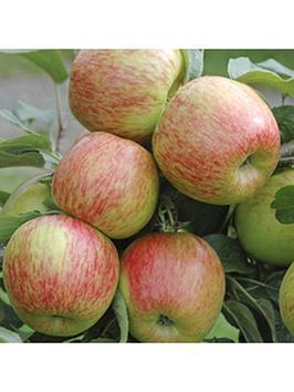 apple-braeburn-5l-potted-tree