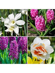 spring-scents-bulb-collection-48-bulbs