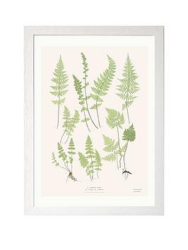 east-end-prints-ferns-by-aster-a3-framed-print